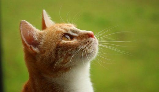 ブランケット・キャッツ第4話|猫に自分の名前をつけた理由