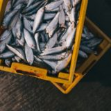 木皿泉劇場 道草「魚屋ブルース」感想|可愛いお魚屋さんのほっこりドラマ
