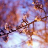 NHKドラマ「夕凪の街 桜の国2018」何年たっても伝えてほしい